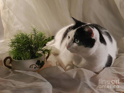 Photograph - Sassy And The Fern by Grace Dillon