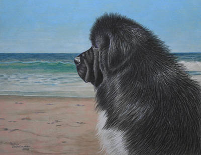 Newfoundland Drawing - Satchel By The Sea by Debbie Stonebraker