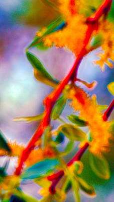 Digital Manipulation Photograph - Saturated  by Brent Dolliver