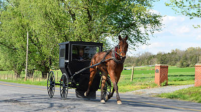 Photograph - Saturday Buggy Ride by Cathy Shiflett