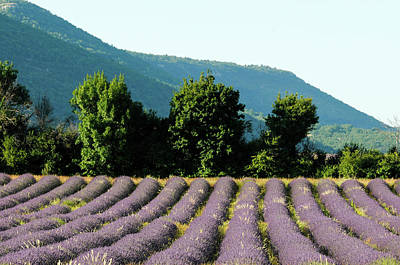 Sergio Photograph - Sault, Provence, France by Sergio Pitamitz
