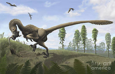 Saurornitholestes Seeks Prey In Burrows Print by Emily Willoughby