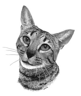 Drawing - Savannah Cat by Scott Woyak