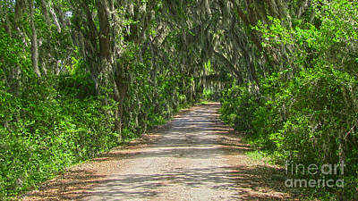 Photograph - Savannah Country Road by D Wallace