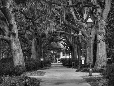 Photograph - Savannah - Forsyth Park 007 Bw by Lance Vaughn