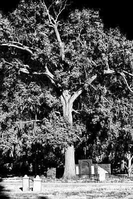 Savannah Fine Art . Savannah Old Trees Photograph - Savannah Graves by John Rizzuto