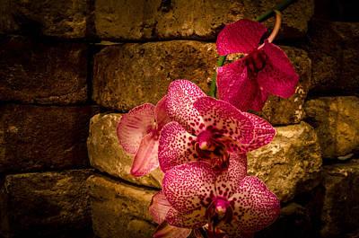 Savannah Grey Orchid Art Print by Richard Kook