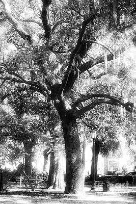 Savannah Fine Art . Savannah Old Trees Photograph - Savannah Oak by John Rizzuto