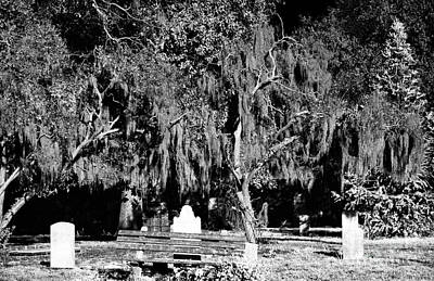 Savannah Fine Art . Savannah Old Trees Photograph - Savannah Resting Place by John Rizzuto