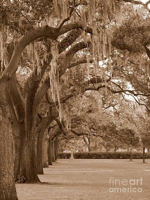 Photograph - Savannah Sepia - Emmet Park by Carol Groenen