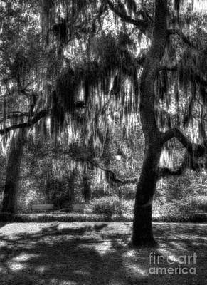 Photograph - Savannah Sunshine Bw by Mel Steinhauer