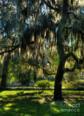 Savannah Sunshine Art Print