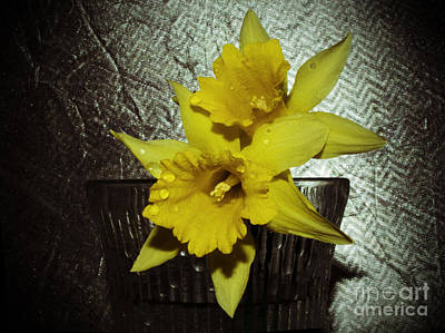 Photograph - Saved Daffolids by Donna Brown