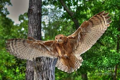 Photograph - Savigney's Eagle Owl Adult by Kathy Baccari