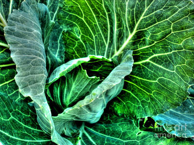 Photograph - Savoy Cabbage by Nina Ficur Feenan