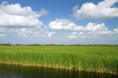 Sawgrass In The Florida Everglades Art Print by David R. Frazier