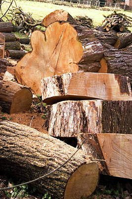 Agricultural Industry Wall Art - Photograph - Sawn Logs by Sheila Terry/science Photo Library