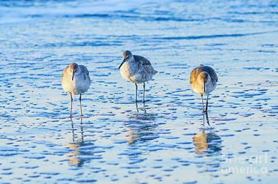 Photograph - Sc Willets by Anthony Heflin