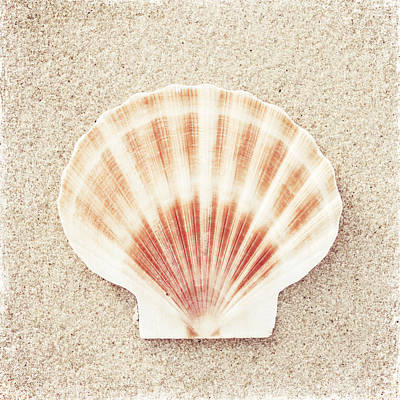Scallop Shell Art Print by Carolyn Cochrane