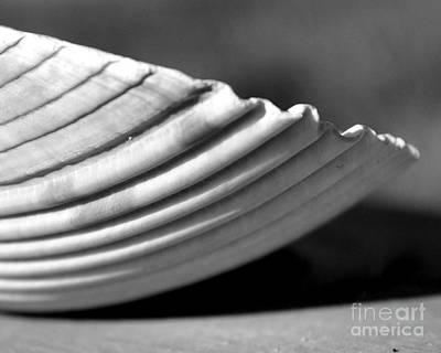 Photograph - Scallop Shell by Kathy Flood