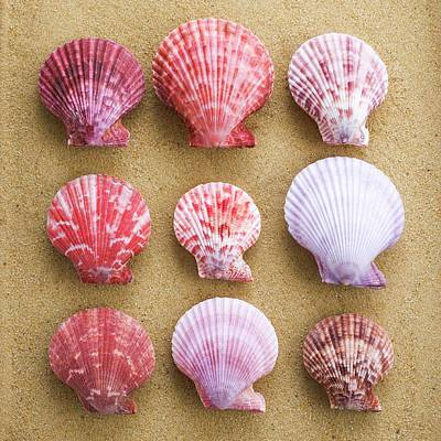 Scallop Shells In Rows Art Print
