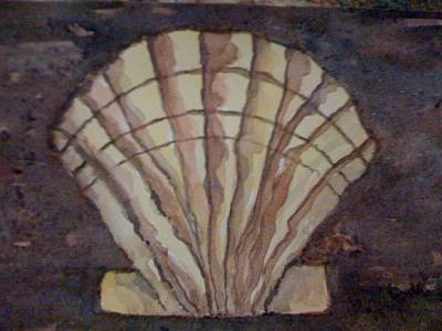 Painting - Scalloped Shell by Bobbin