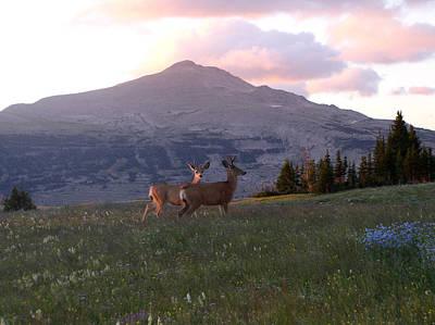 Scapegoat Deer Morning Alpenglow Art Print by Pam Little