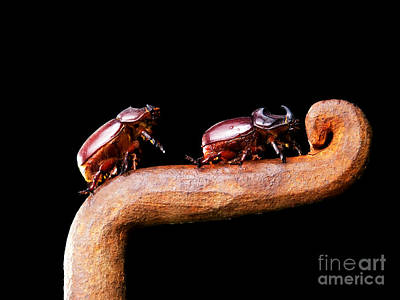 Rhinoceros Photograph - Scarabs by Sinisa Botas