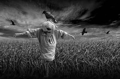 Scarecrow And Black Crows Over A Cornfield Art Print by Randall Nyhof