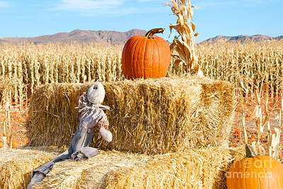 Photograph - Scarecrow Breaktime by Vinnie Oakes