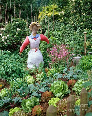 Photograph - Scarecrow In Vegetable Garden by Hans Reinhard