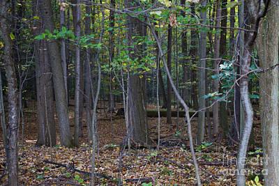 Photograph - Scared Grove 3 by William Norton