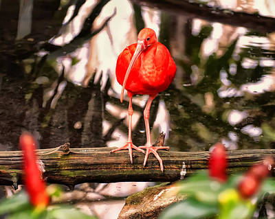 Ibis Digital Art - Scarlet Ibis In A Pond by Chris Flees