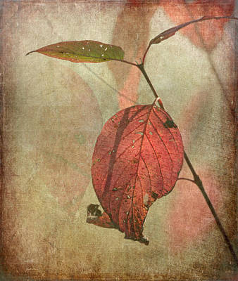 Of Autumn Photograph - Scarlet Leaf by Angie Vogel