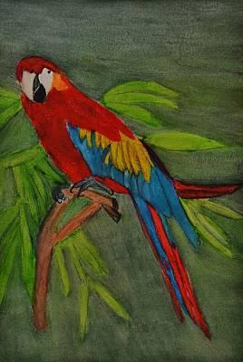 Scarlet Mccaw Art Print by Linda Brown