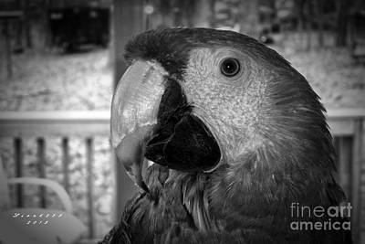 Photograph - Scarlet Macaw by Melissa Messick