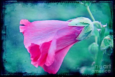 Scarlet Mallow Art Print