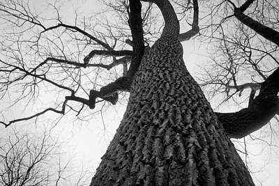 Photograph - Scary Tree by Richie Stewart