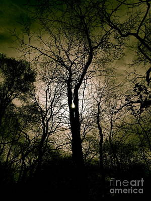 Photograph - Scary Tree by Tim Good