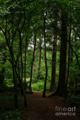 Photograph - Scary Welsh Country Forest by Doc Braham
