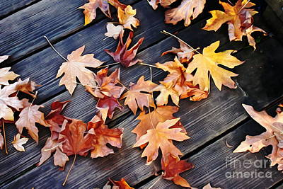 Photograph - Scattered Leaves by Erica Hanel
