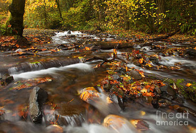 Autumn Photograph - Scattered Leaves by Mike  Dawson