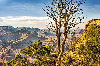 Grand Canyon Photograph - Scenic Grand Canyon by Tod and Cynthia Grubbs