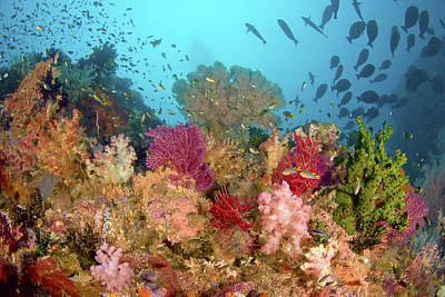 Scenic Of Diverse Reef Life, Misool Art Print