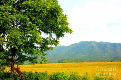 Photograph - Scenic View by Cynthia Mask