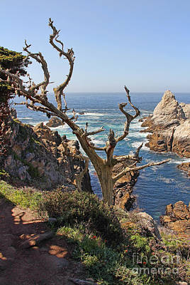 Truck Art - Pinnacle Cove Point Lobos Scenic View by Jack Schultz