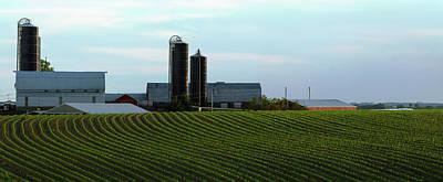 Scenic View Of Corn Field Against Sky Art Print