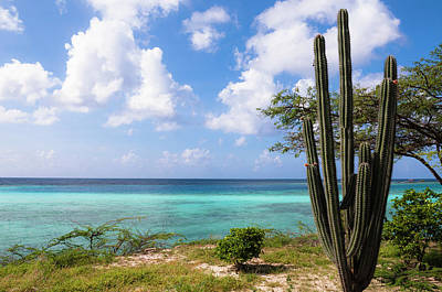Antilles Photograph - Scenic With Cactus By Coast, Mangel by Alberto Biscaro