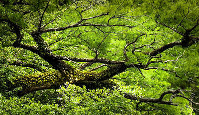 Giant Fern Photograph - Scent Of Green by Karen Wiles