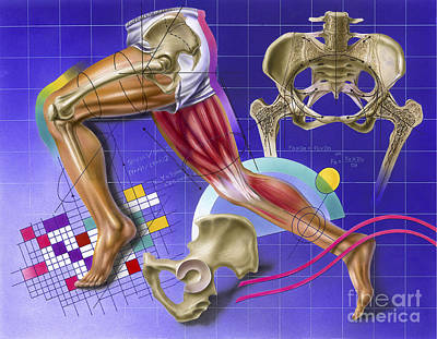Athletic Digital Art - Schematic Showing Hip And Leg Motion by TriFocal Communications